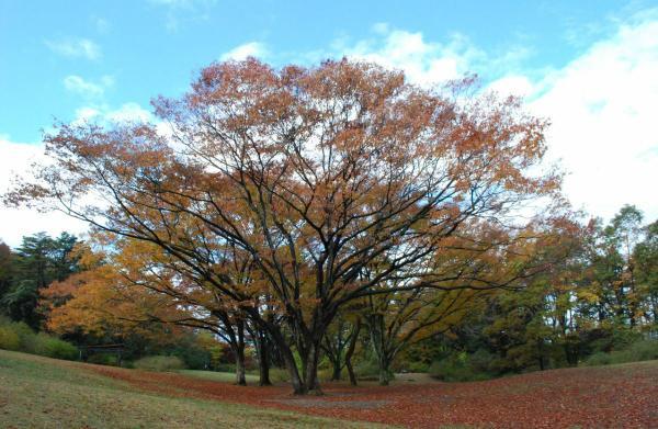 仙台市野草園 image