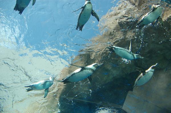 島根海洋館AQUAS image