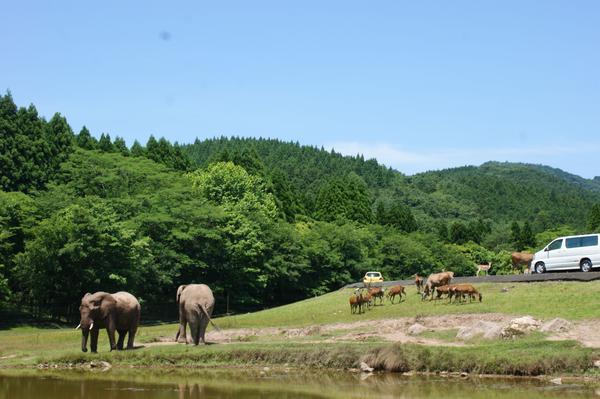秋吉台自然动物公园 image