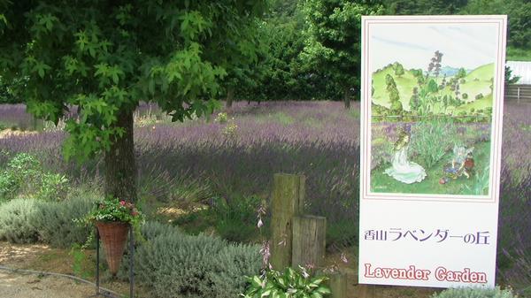 香山ラベンダーの丘 image
