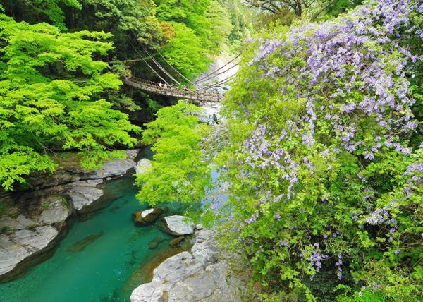 祖谷のかずら橋 image