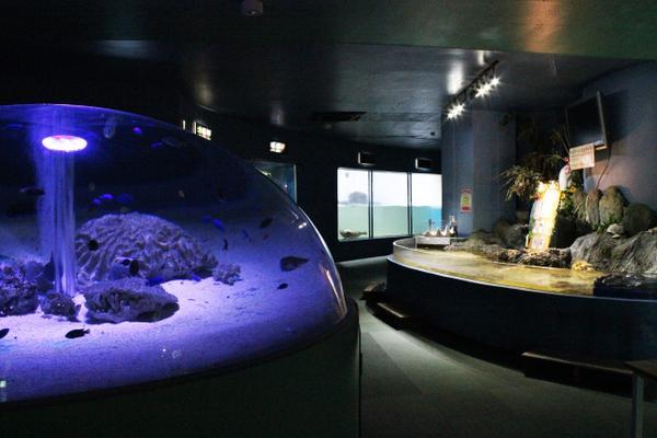 新屋島水族館 image
