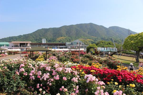 今治市よしうみバラ公園 image