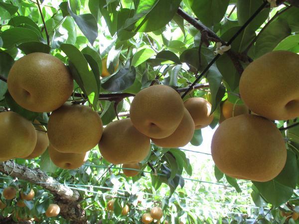 フルーツパーク 久松農園 image