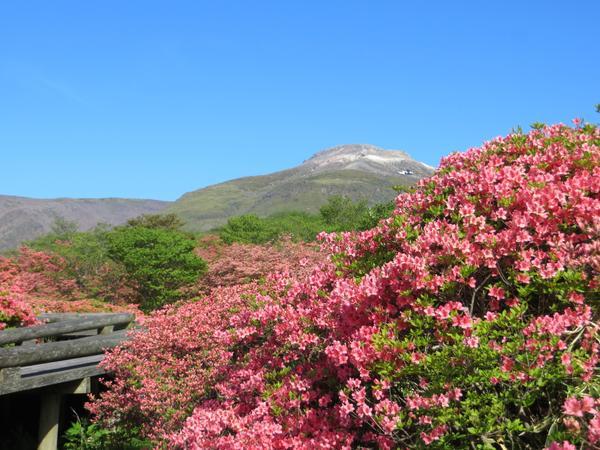 八幡杜鵑園地 image