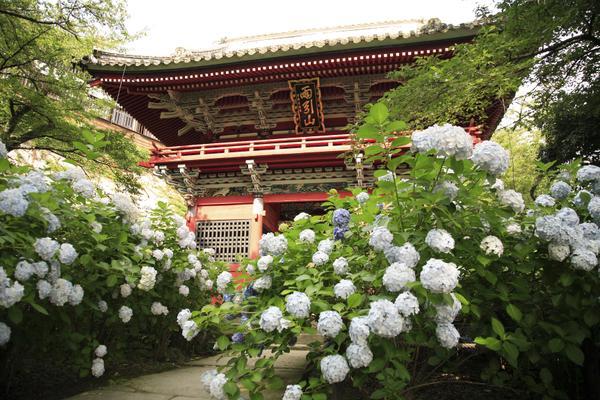 雨引観音(雨引山楽法寺) image