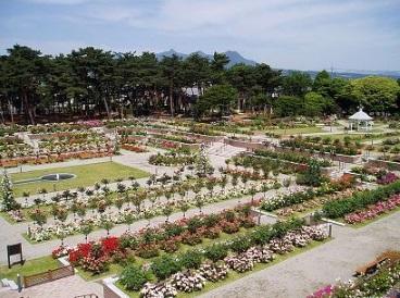 敷島公園ばら園 image