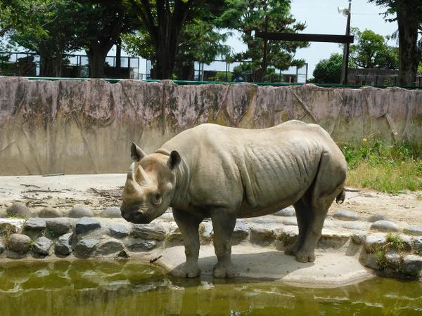 日立市かみね動物園 image