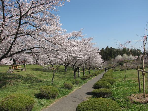 羊山公園 image