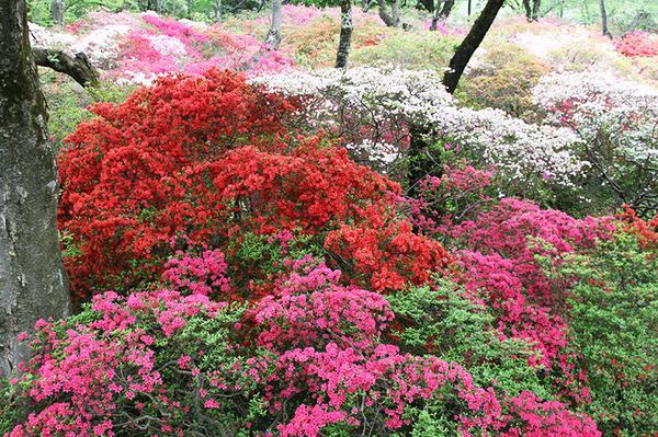 清水公園 image