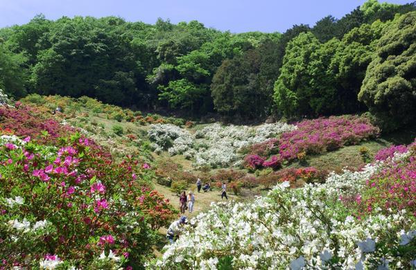 五大尊つつじ公園 image
