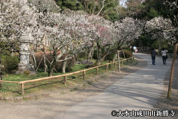 成田山公園 梅林 image