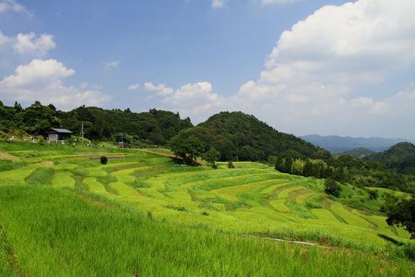 Oyama Senmaida image