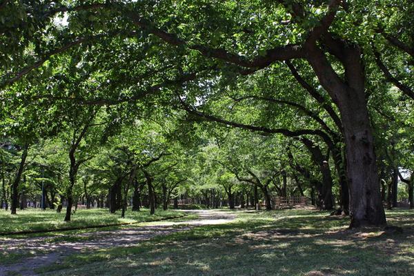 合浦公園 image