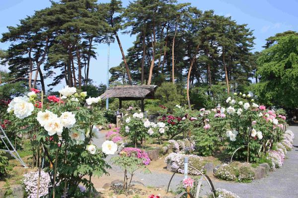 สวนโบตั๋นซูคางาวะ image