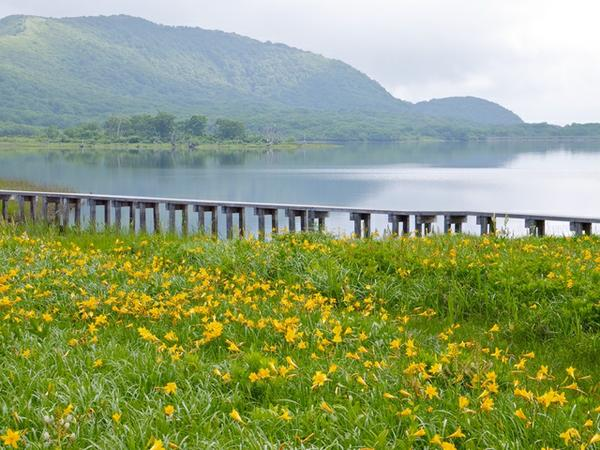 พื้นที่ชุ่มน้ำโองูนินุมะชิสึเกง image