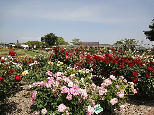 센다이 농업 원예 센터 미도리노모리 image