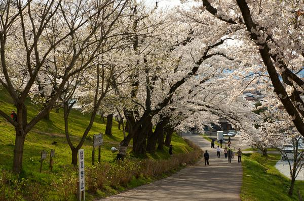 에보시야마 센본자쿠라 image