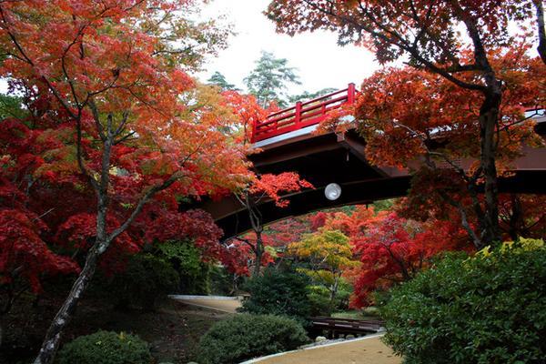 Yahiko Park (Maple Valley) image