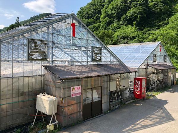 汤泽草莓村 image
