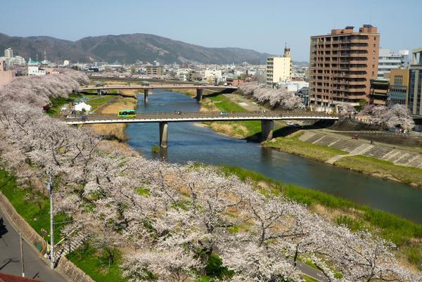 아스와 강변 벚꽃 터널 image