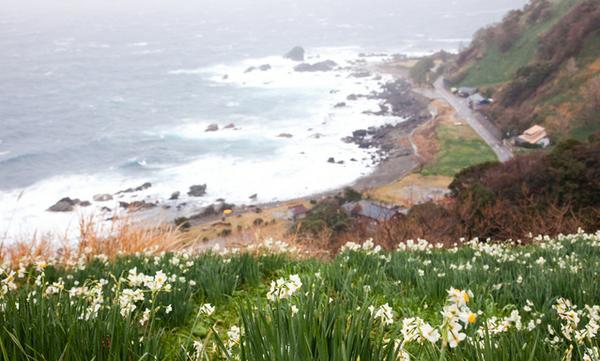 越前海岸 image