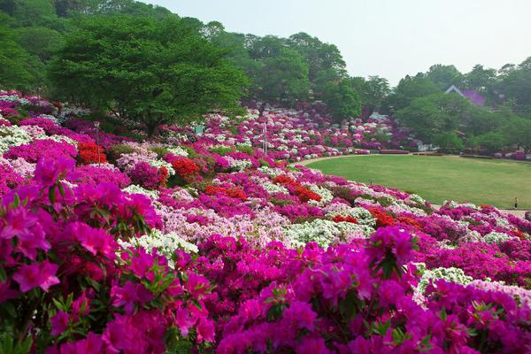 西山公園 image
