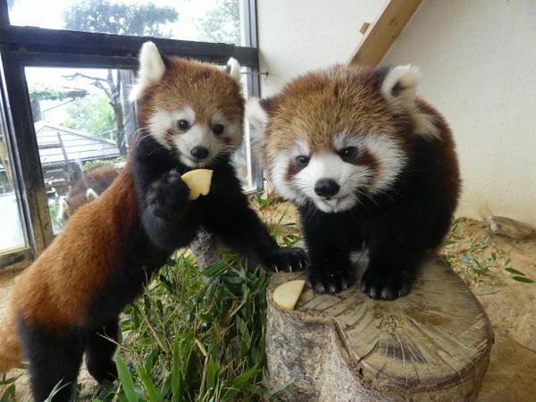 鯖江市西山動物園 image