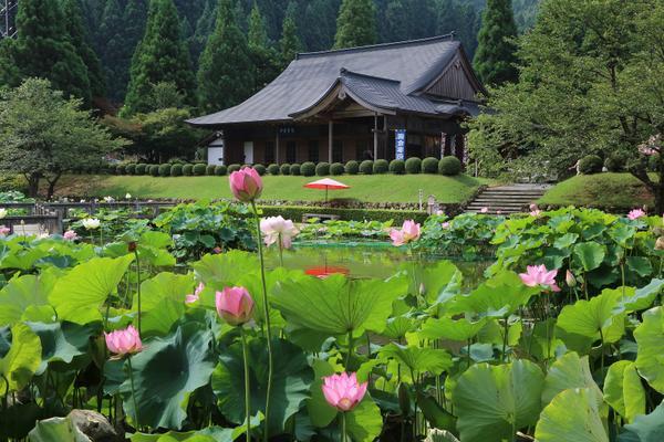 花はす公園 image