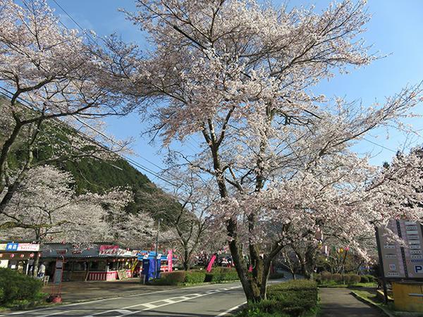 寺尾ヶ原千本桜公園 image
