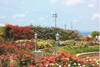 大野町バラ公園 image