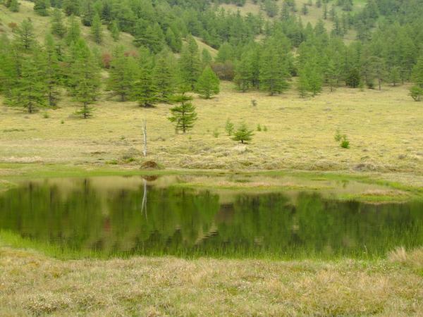 池の平湿原 image