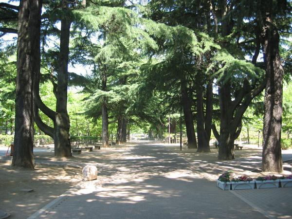 あがたの森公園 image