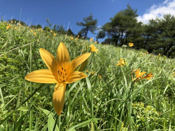 八島ヶ原湿原 image