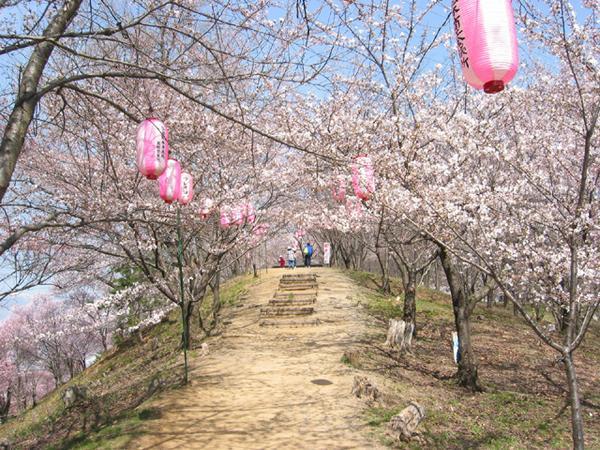 弘法山古墳 image