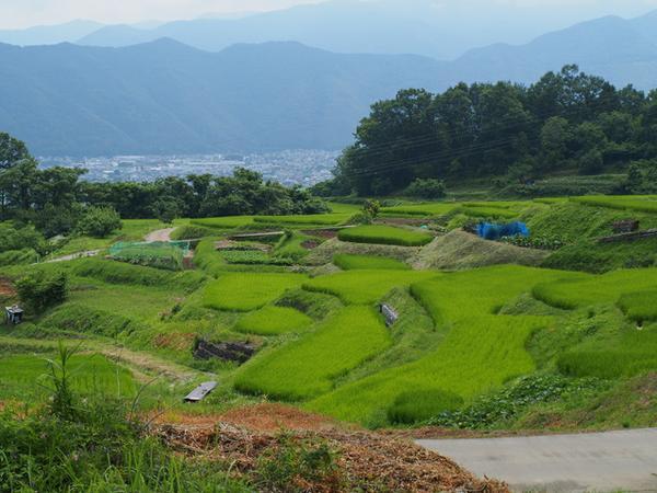 Obasute Rice Terraces image