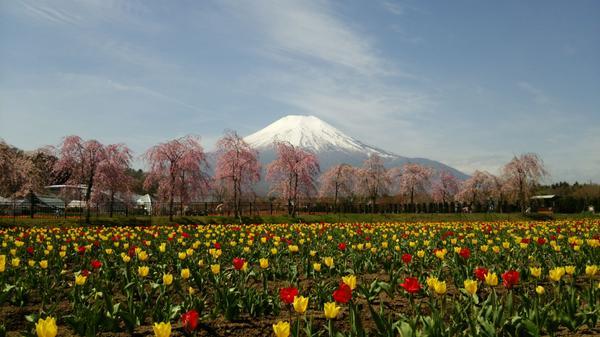 山中湖 花の都公園 image