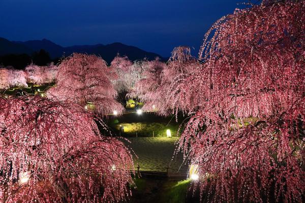 Suzuka Forest Garden image