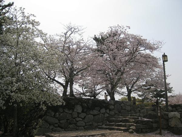 松坂城跡(松阪公園) image