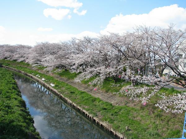 แม่น้ำอิวาคุระโงะโจ image