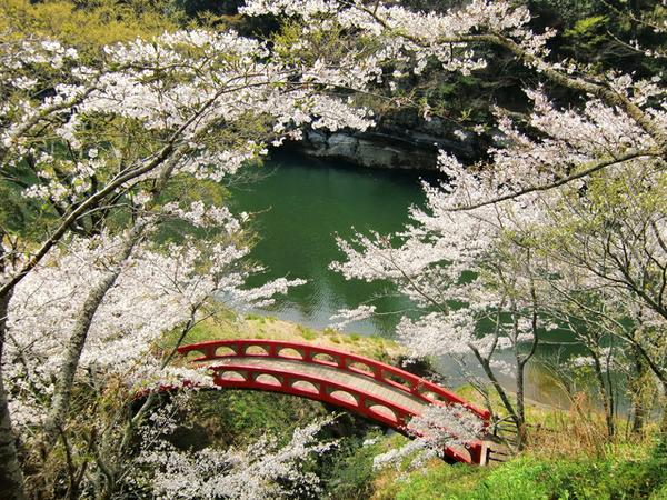 桜淵公園 image