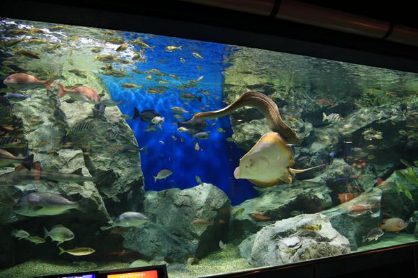 Hekinan Seaside Aquarium image