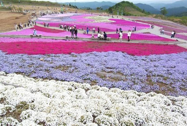 茶臼山高原 image