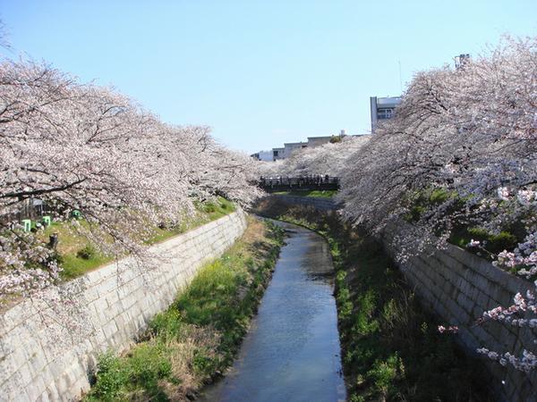 ชิคิโนะมิจิ แห่งแม่น้ำยามาซากิ image