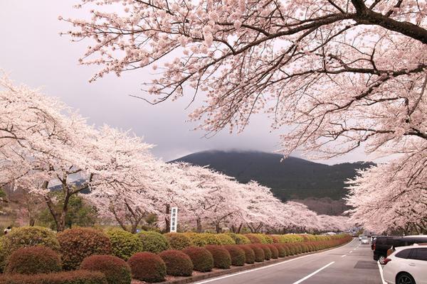 冨士霊園 image
