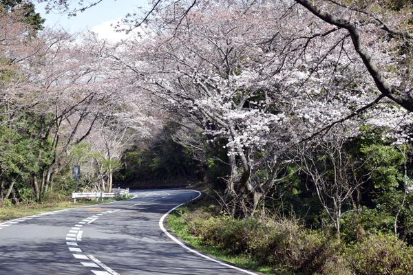 日本平パークウェイ image