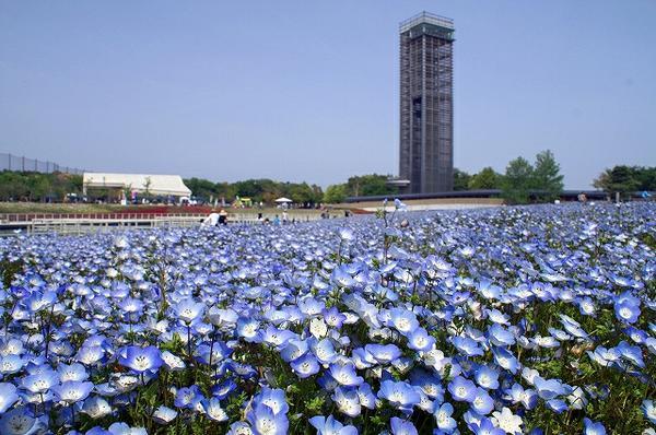浜名湖ガーデンパーク image