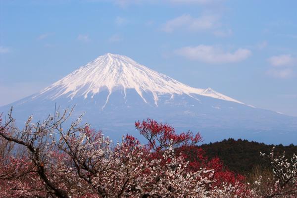 岩本山公園 image