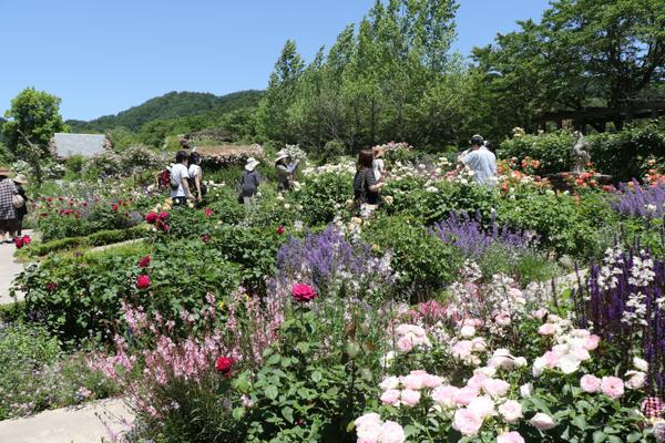 English Garden(イングリッシュガーデン) ローザンベリー多和田 image