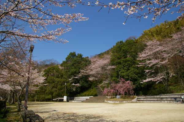 八幡公園 image